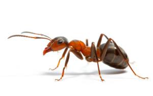 ant-control